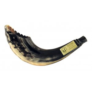 Crown Cut Ram's Horn Shofar in Moroccan Style - Dark