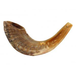Natural Rams Horn Shofar - Medium