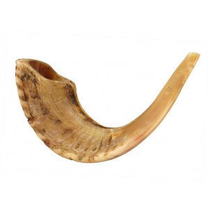 Light Shades Large Ram's Horn Shofar with Natural Finish